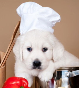 Hunde-Rezepte