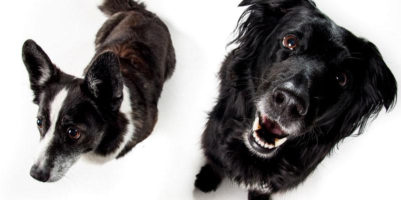 Was es bei der Hundeerziehung zu beachten gibt