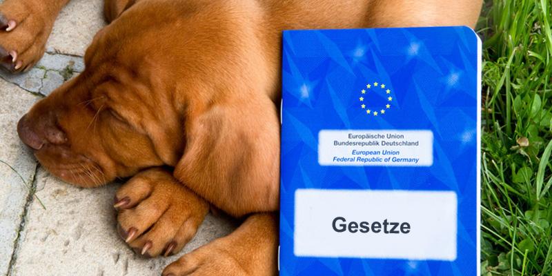 Hundegesetze in Deutschland