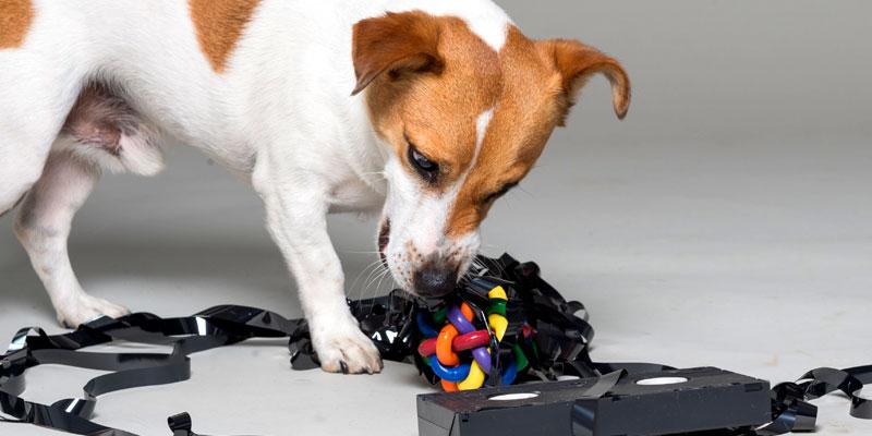 Hundehaftpflicht für alle Fälle