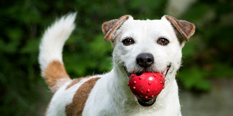 Die besten Tricks bei der Hundehaltung