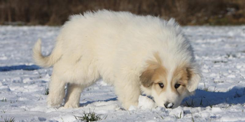 Ist Schneefressen gefährlich?