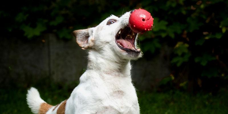 Hundesport für Bewegung und Fitness