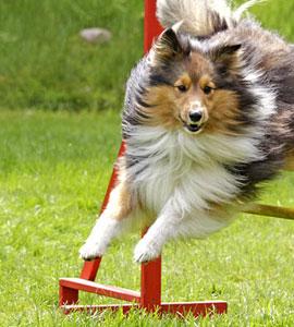 Die zehn goldenen Regeln für Spaß am Spiel mit dem Hund