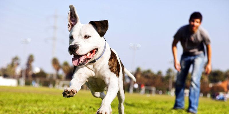 Anschaffung und Haltung eines Hundes