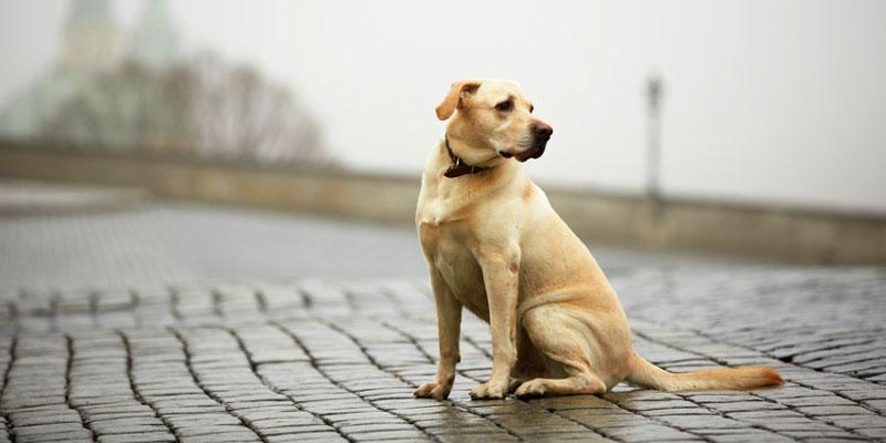 Hund entlaufen - was nun