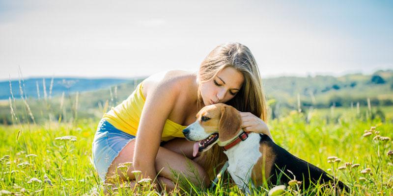 Gesucht & Gefunden: Wie finde ich einen Hund?