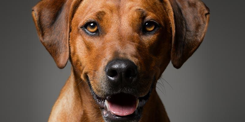 Anatomie des Hundes