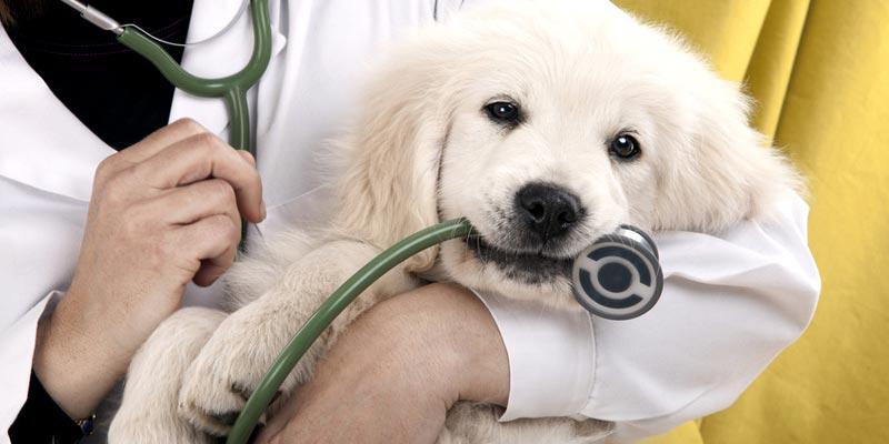 Gesundheit beim Hund