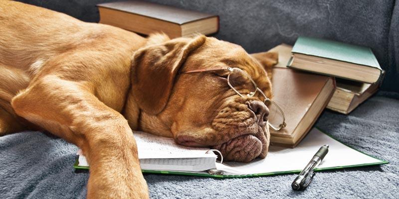 Lebenserwartung Hunde