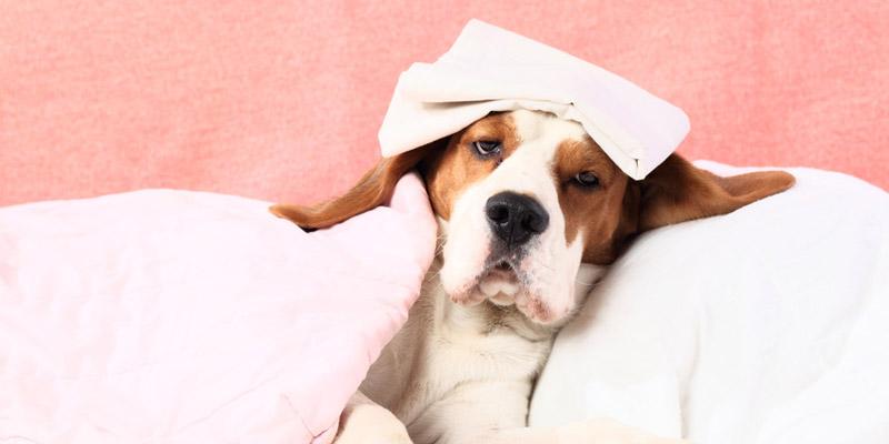 krankheitssymptome beim hund kommentare seite 4. Black Bedroom Furniture Sets. Home Design Ideas