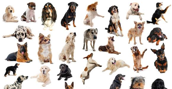 Alle Informationen in unserer Hunderassendatenbank