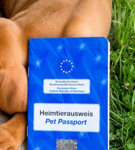 Auf welche Tiergesetze müsst ihr im Ausland achten?
