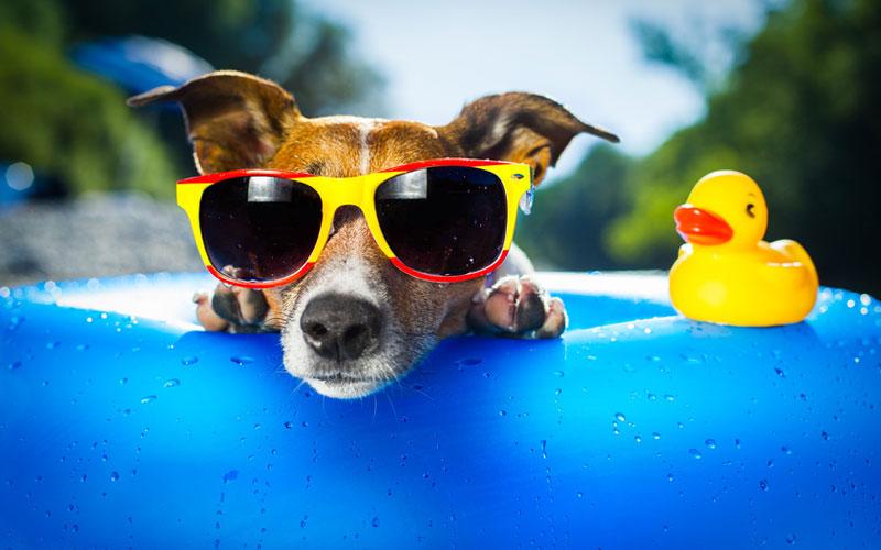 Mit dem Hund in den Urlaub