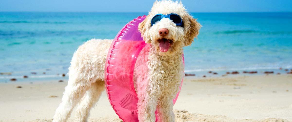 Sommerspecial: Mit Hunden in den Urlaub