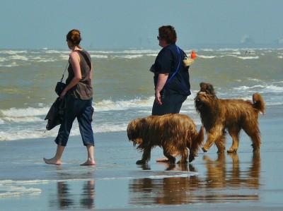 beach-391256_1280