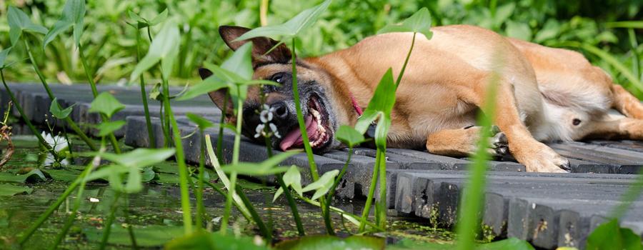 Der hundefreundliche Garten – so gelingt's