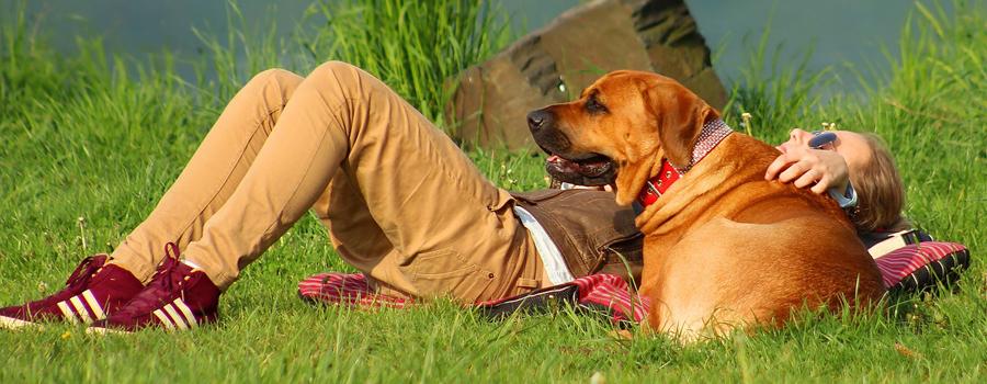 Mit Hunden durch den Sommer: Auf was ihr achten müsst