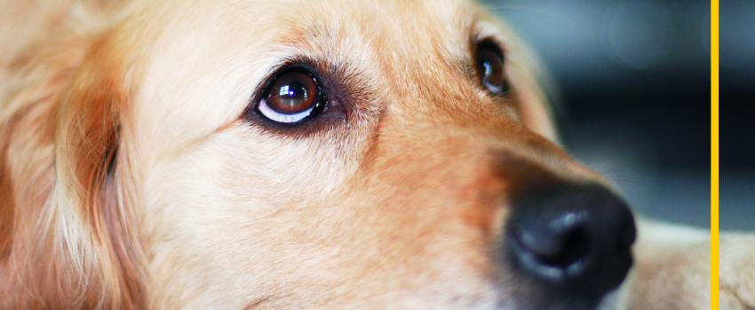 Hunde Praxishandbuch