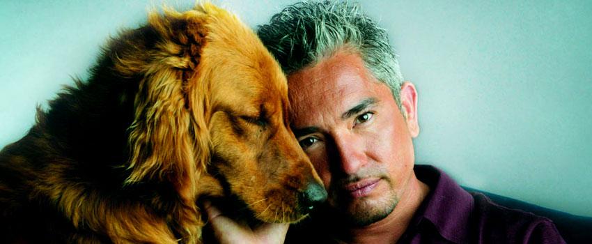 Der Hundeflüsterer, Staffel 3