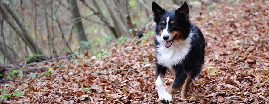 Mit Hunden Durch Den Herbst Was Ihr Beachten Müsst Hundede