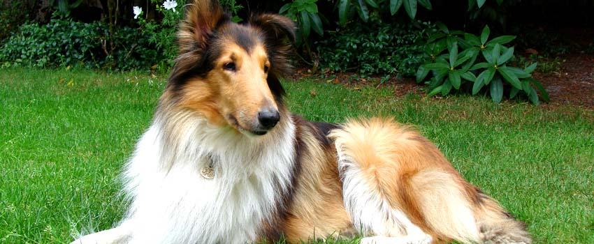 Der Hund im Alltag DVD