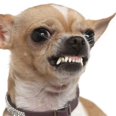 Hundeangriff - auch niedliche Hunde haben Zähne