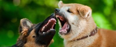 Hundeangriff - Wie verhalte ich mich am besten?