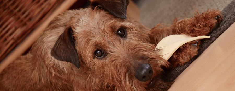 hundeallergiker-headbild