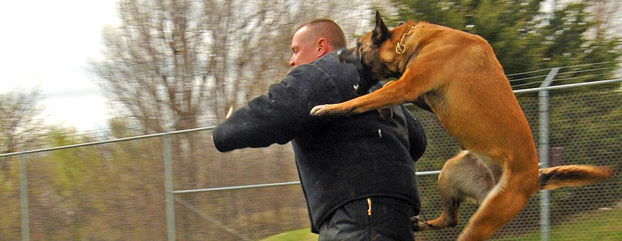Was tun beim Hundeangriff?