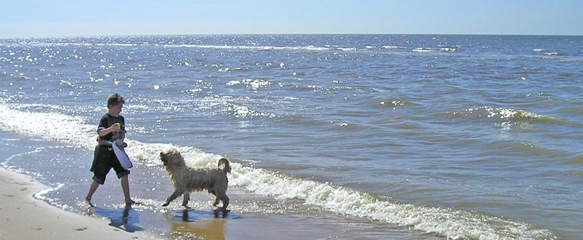 Urlaub mit dem Hund am Strand