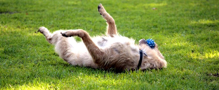 Hund erfolgreich vermittelt, Tasso