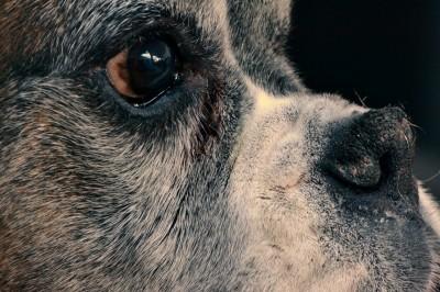 dog-252618_1280