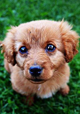 Hundezucht vs. Vermehrung: Wieso Hobbyhalter nicht züchten sollten!