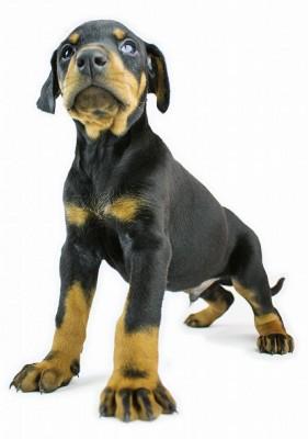 Hunderechtsschutzversicherung