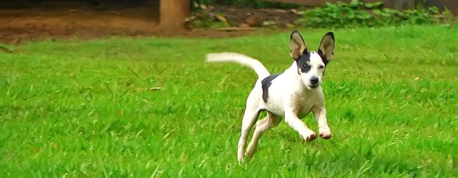 Hundehalter-Rechtsschutz