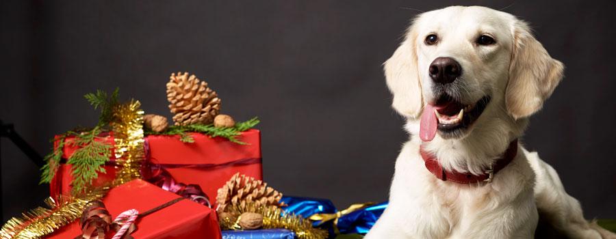 Weihnachtszeit ist Plätzchenzeit - auch für Hunde