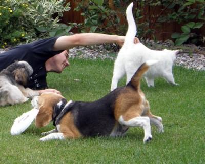 Hundehaftplficht