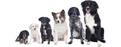 Welcher Hunderassen-Typ bist du?