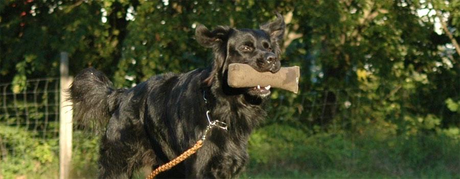 Sportlich fit mit dem Hund