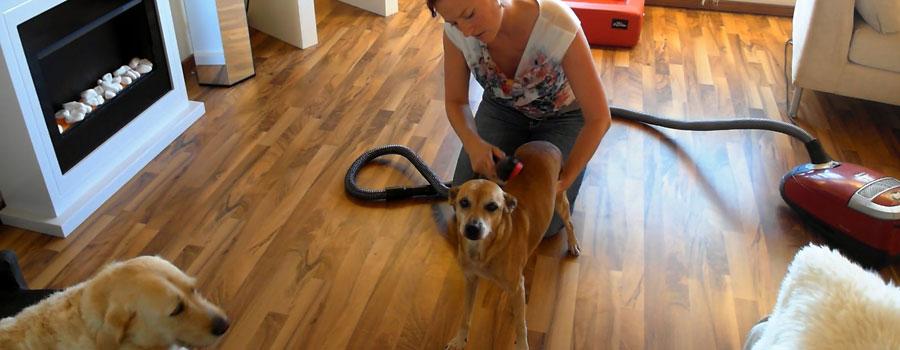 Cofix ® Hundestaubsauger
