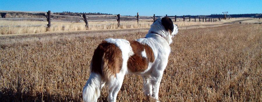 Natürlicher Jagdtrieb bei Hunden
