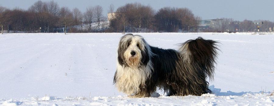 So schützen Sie Ihren Hund bei dieser Kälte