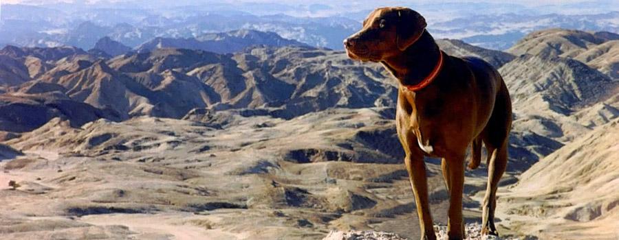 Der Labrador ist der beliebteste Hund 2014