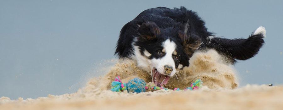 Das richtige Hundespielzeug finden