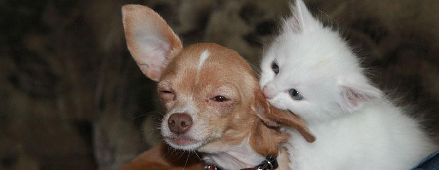 Hundhalter oder Katzenpersonal