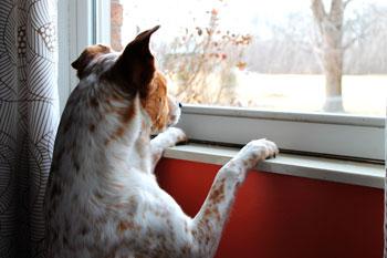 Die Bedeutung längerer Abwesenheit für den Hund
