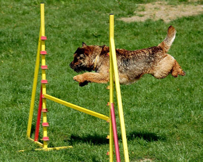 Sportmöglichkeiten für Hund und Herrchen