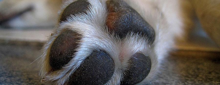 OP-Versicherungen für Hunde – Marktüberblick und Tipps
