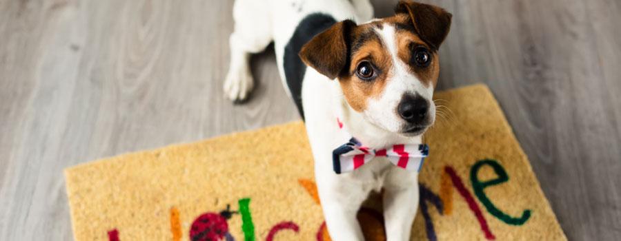 Einrichtungsideen für Hundeliebhaber